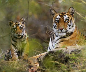 Bandhavgarh Tour & Travel Guide